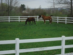 Horses enjoy pasture while waiting for their appointment