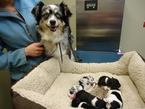 Millie & her pups